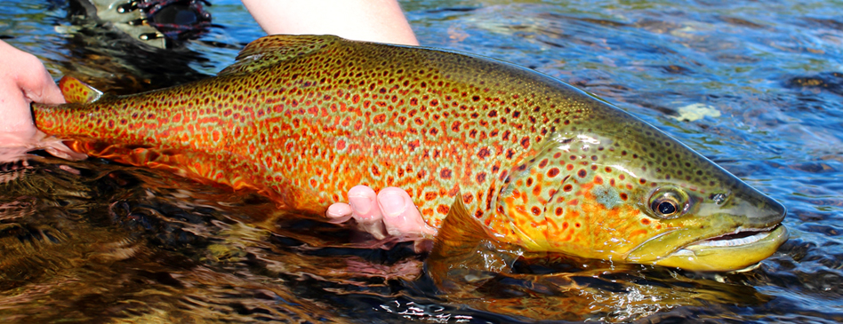 Fishing fantastic mr trout for Dream about fish out of water