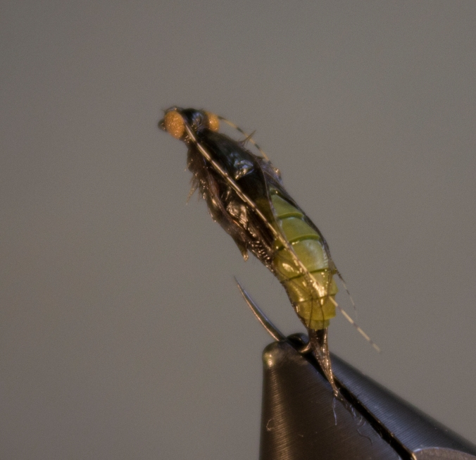 Caddis pupa back