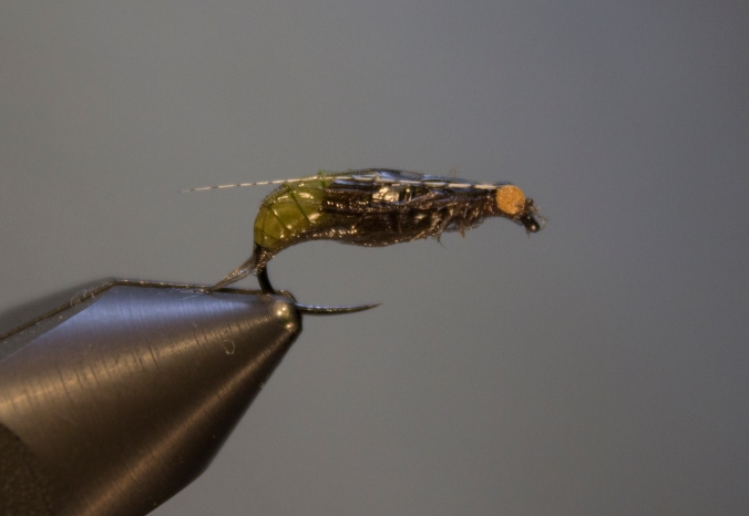A wet caddis pupa